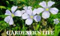 真鍋造園blog-Gardener's Life