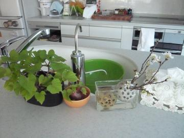 kitchen_gardening03