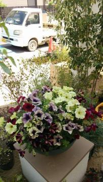 新築祝い花鉢
