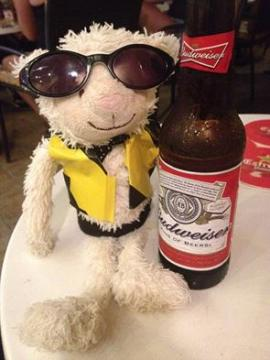 sheep with budweiser